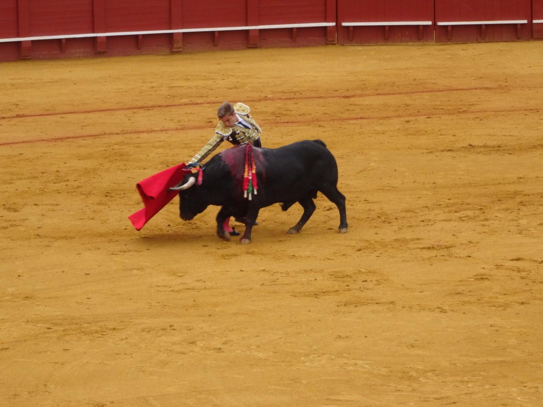 Spain, bullfighter, bull, europe